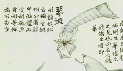 皮皮虾的形象史