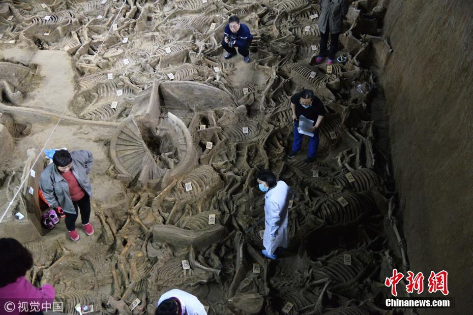 """河南郑州古墓出土巨型""""豪车""""已埋地下2千多年"""