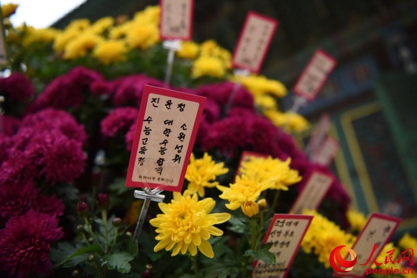 韩国高考倒计时 考生家长寺庙跪地祈福【5】
