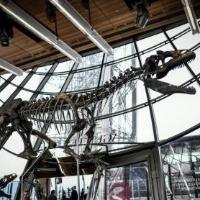 罕见侏罗纪时期恐龙骸骨化石拍卖200多万欧元